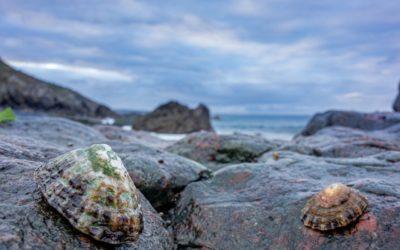 La lapa, y su casa de roca